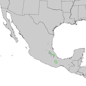 Pinus patula - Image: Pinus patula range map 1