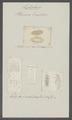 Planaria tremellaris - - Print - Iconographia Zoologica - Special Collections University of Amsterdam - UBAINV0274 105 08 0004.tif