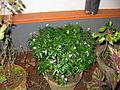 Plant in pot (4).JPG