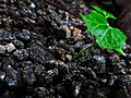 Plant through Stones.jpg
