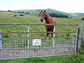 Please do not feed the horse - geograph.org.uk - 904642.jpg