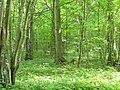 Podlaskie - Czarna Białostocka - Puszcza Knyszyńska - Rez. Jesionowe Góry - Góry Jezionowe - v-ESE.JPG