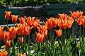 Poertschach Blumenstrand vor Parkhotel Tulpenbeet 28042013 128.jpg