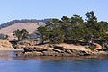 Point Lobos September 2012 007.jpg