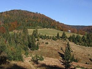 Gorce National Park - Slopes of Polana Fiedorówka