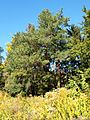 Poltava Botanical garden (77).jpg
