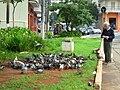 Pombas na praça à esquina da Avenida Jabaquara com a Rua Luís Góis - panoramio.jpg
