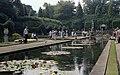 Pond at Wisley Gardens - geograph.org.uk - 776563.jpg