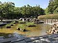 Pond in Higashi Park, Fukuoka 3.jpg