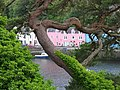 Portree Harbour - geograph.org.uk - 402542.jpg