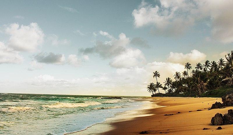 Praia com coqueiros