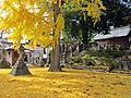 Precincts of Taga-jinja shrine in Taihaku ward, Sendai city 2.JPG