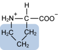 Proline w functional group highlighted.png