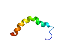 Protein UCN2 PDB 2RMG.png