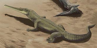 2012 in paleontology - Image: Protome batalaria