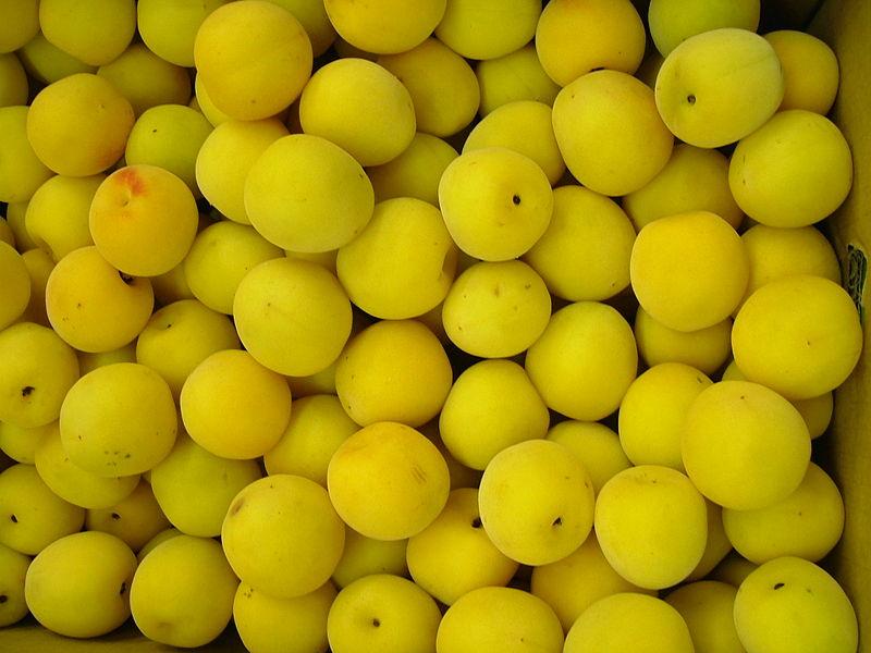 fruit de l'abricotier du japon