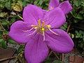 Purplepetals.jpg