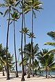 Puuhonua o Honaunau Historical Park, Captain Cook (504635) (24005515772).jpg