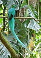 Quetzal4.jpg