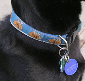 quick-release buckle collar taken by Elf