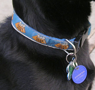 Collar (animal) - Nylon quick-release buckle collar on a dog with identification and medical tags.
