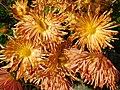 Quilled Styled Chrysanthemum.jpg