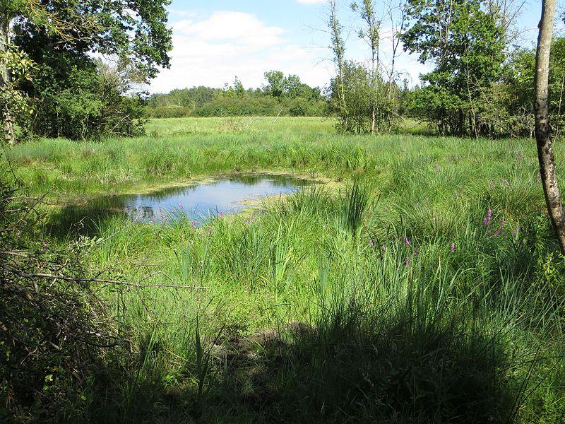 Un aperçu de divers systèmes du marais: fossé, marais à carex, prairie humide, sécheron