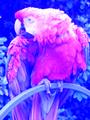 RG-sub 16bits palette sample image.png
