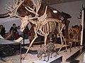 ROM - Stag-moose.jpg