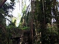 Rainforest Biome Biosphere 2.jpg