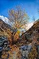 Rakaposhi view point - autumn.jpg
