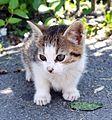 Ramnicu Valcea - cat.jpg