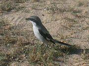 A bird in Tunisia