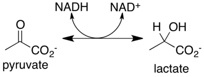 Reaction catalyzed by lactate dehydrogenase.png