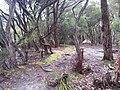 Refuge Cove, Wilsons Promontory National Park 12.jpg