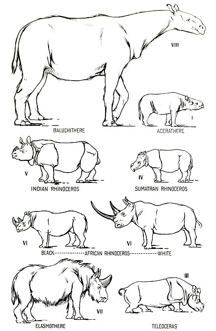 Rhino Evolution | www.pixshark.com - Images Galleries With ...