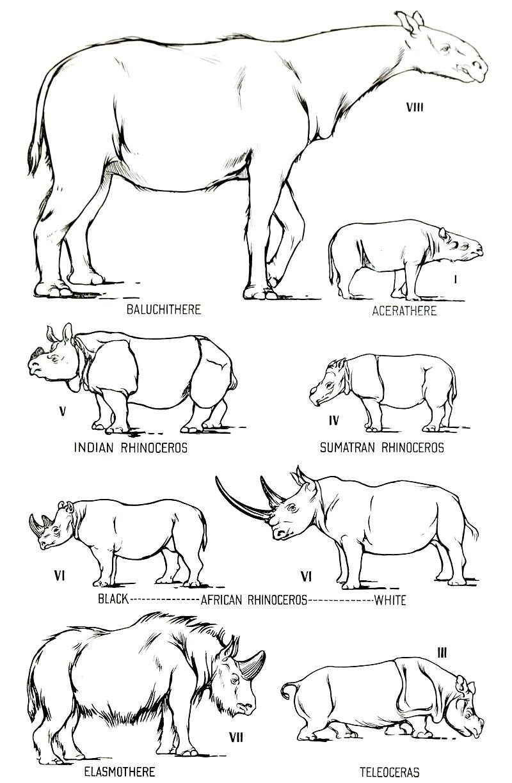 Rhino size comparison.jpg