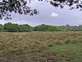 Ridley Green from the south-east corner of Ridley Wood, New Forest - geograph.org.uk - 433124.jpg