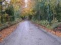 Road at Birdstown Demesne (1) - geograph.org.uk - 1037694.jpg