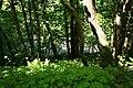 Road through the trees - geograph.org.uk - 1330639.jpg