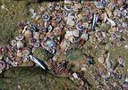 Rock pool with sea shells (mainly Zethalia zelandica).jpg
