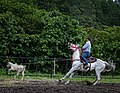 Rodeo Event Calf Roping 26.jpg