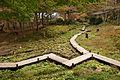 Rokko alpine botanical garden16bs4272.jpg