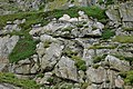 Round Island cliff face, Scilly - geograph.org.uk - 1600190.jpg