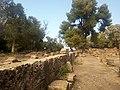 Ruines Romaines Tipaza 7.jpg