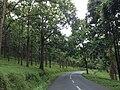 Rural India roads Kerala Tamilnadu.jpg