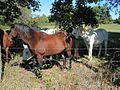 Rural Tipton County TN 2013-10-20 007.jpg