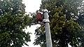 Rusty can on a public pole, Winschoten (2019) 02.jpg