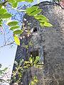 Saint Lucy, Barbados 014.jpg