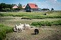 Saltholm - panoramio (29).jpg